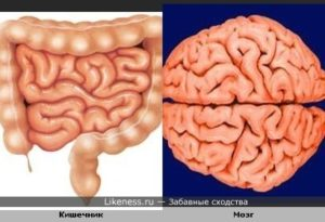 brain_intestine